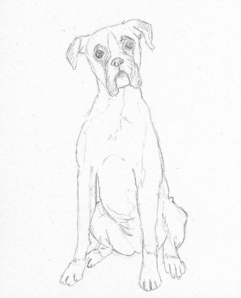 Boxer Dog Sketch By Battlekats Boutique