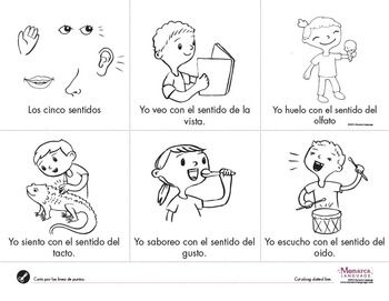 My 5 Senses Mis Cinco Sentidos English Spanish Lesson Spanish Lessons Kindergarten Curriculum Teaching Science