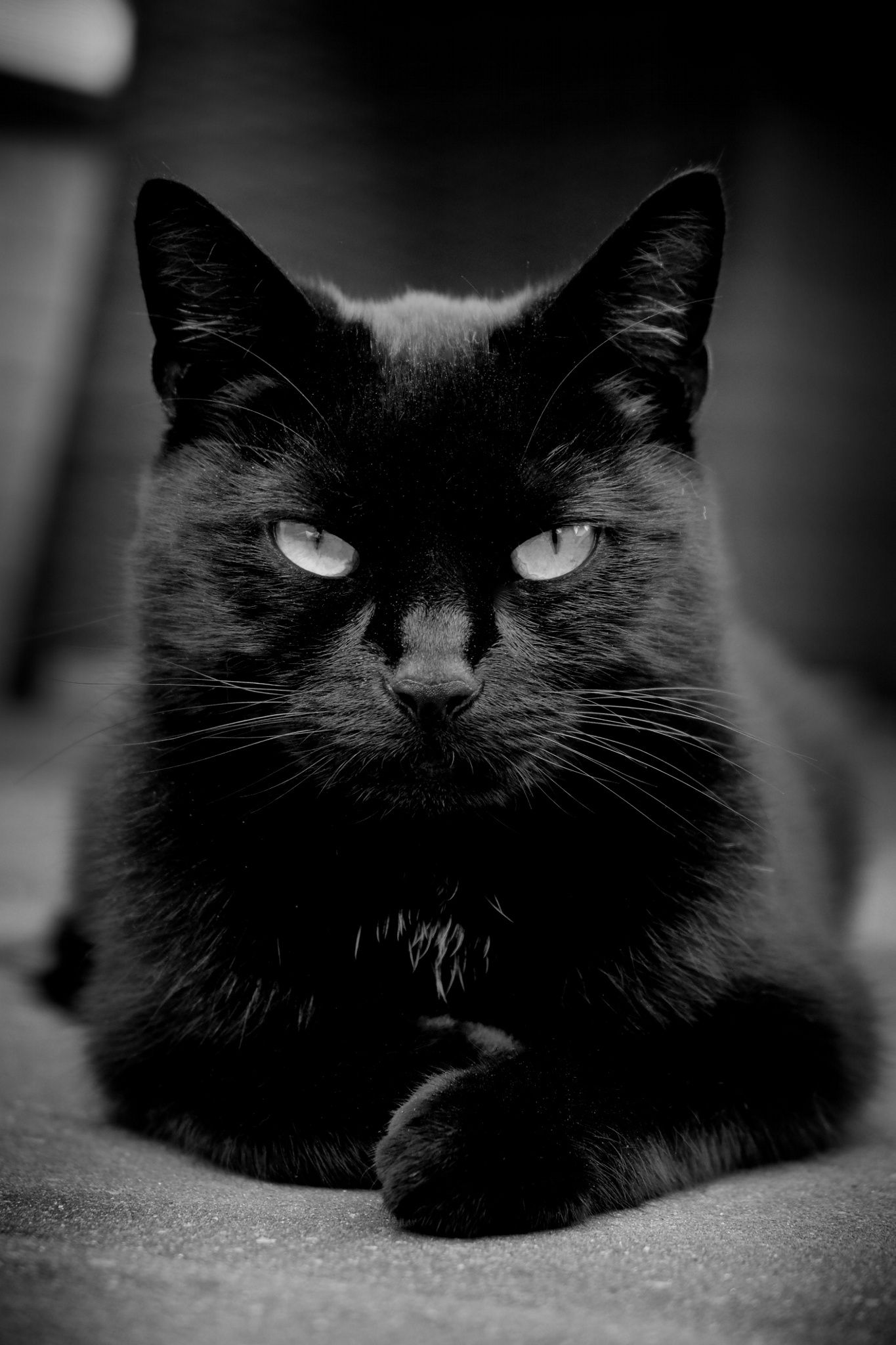 Photo: My black cat!  Little Black Panther by Linda Romviel on 500px