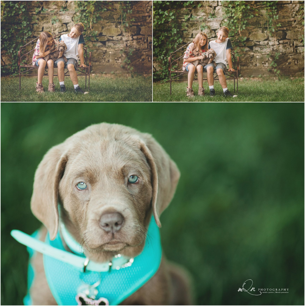 Tips For Including Your Dog In Your Family Photos Mqn Photography Twin Cities Pet Photographer City Pets Family Photos Dogs