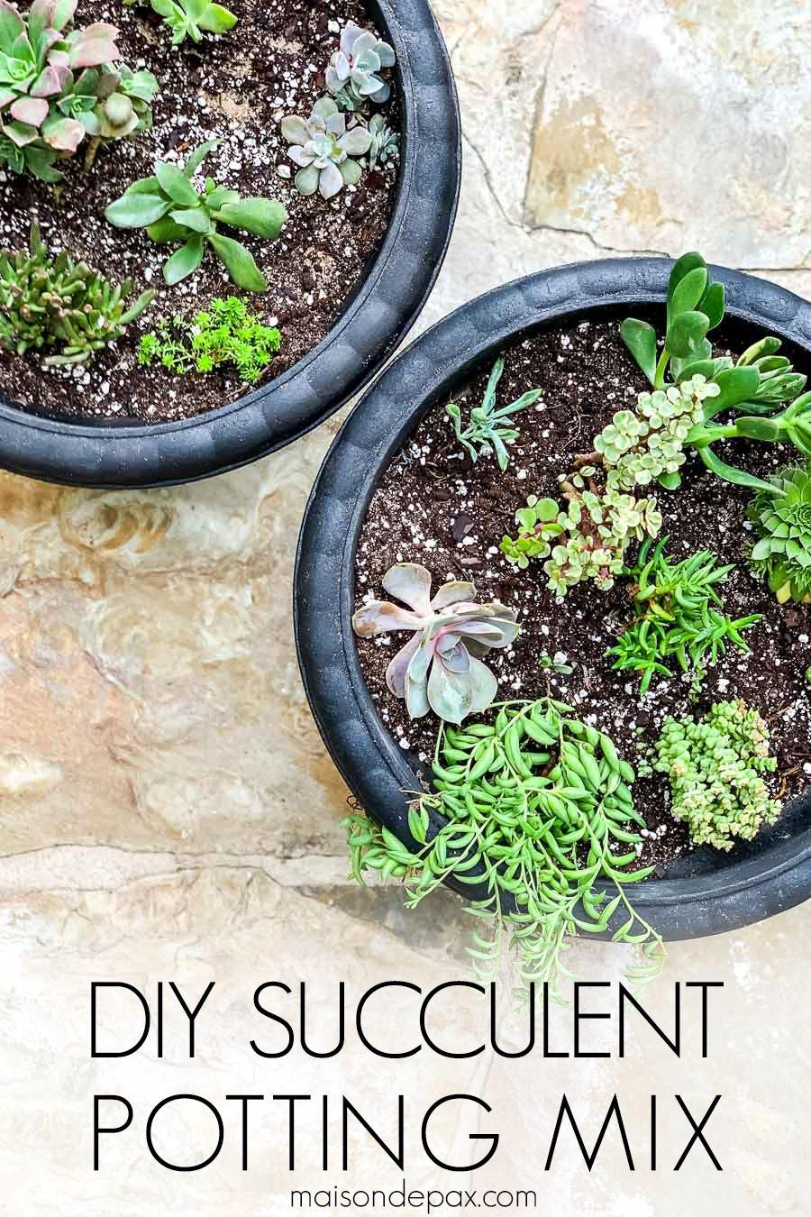Diy succulent soil potting mix succulents diy succulent