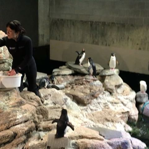 neaq:   Good morning from the penguin exhibit! The... | F Yeah, Penguins!