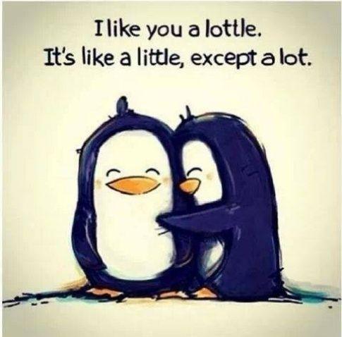 I like you a lottle. It's like a little, except a lot.