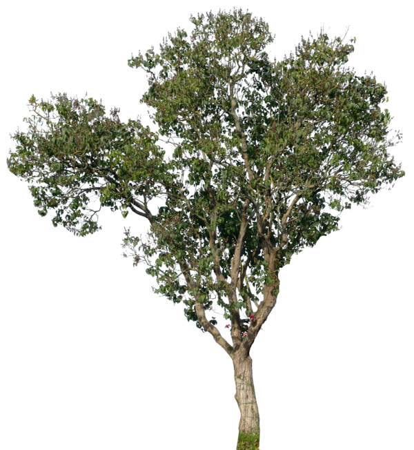 tree 17 png by ~gd08 on deviantART | materiales para ...