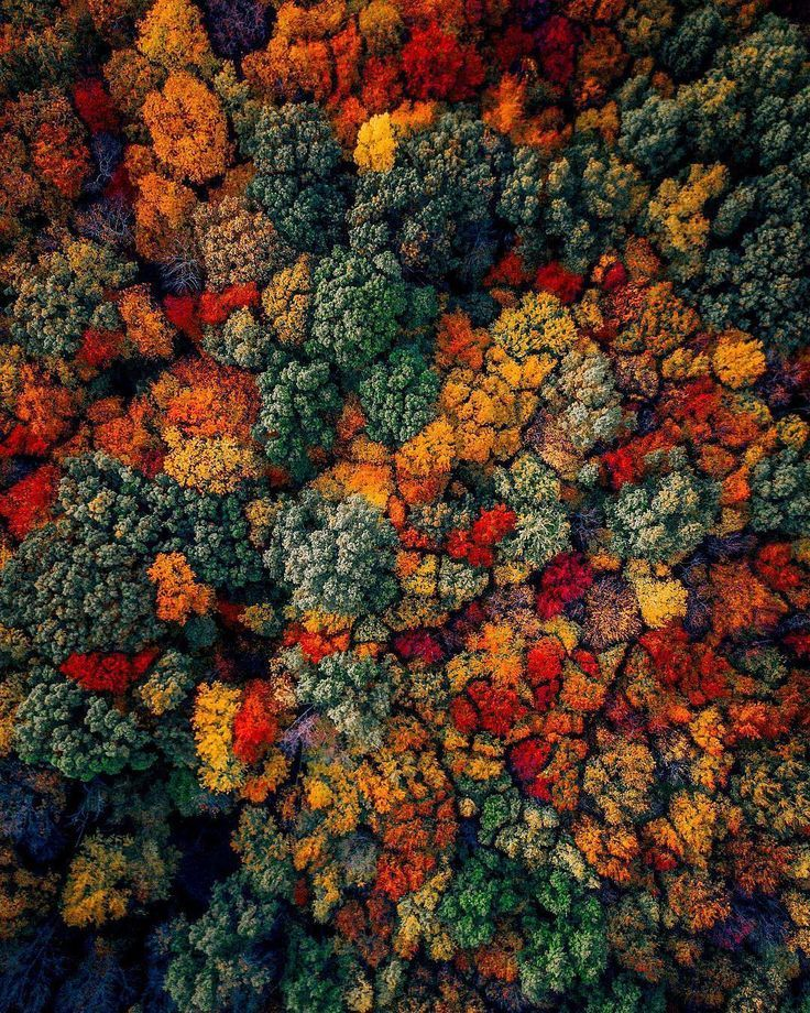 National Geographic Wallpaper Fall Foliage Droneoftheday Striking Drone Photography By Martin