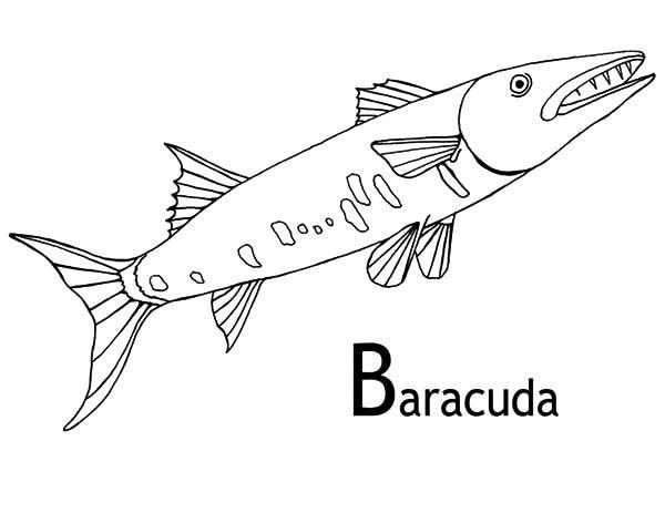 Image Result For Barracuda