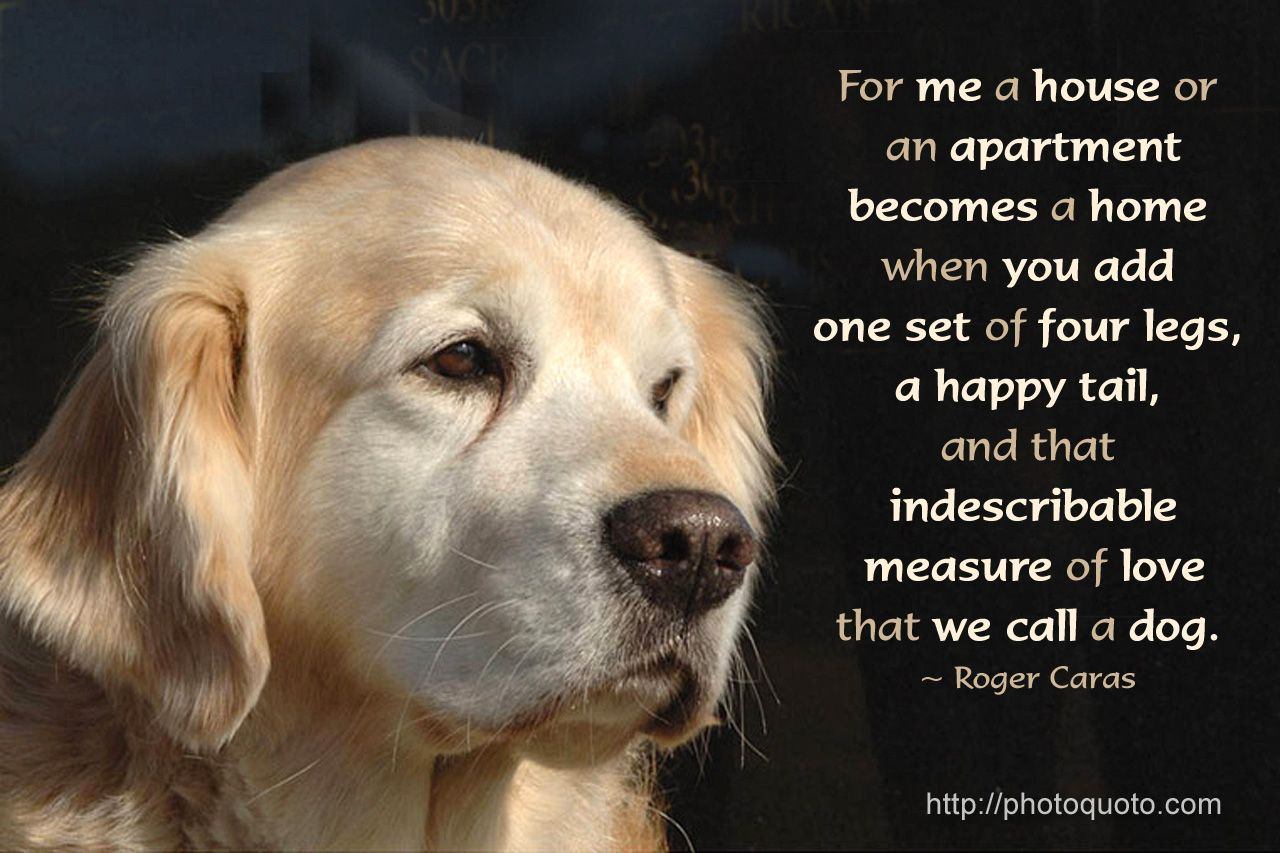 Etonnant The Love Of A Dog Quote   Bing Images