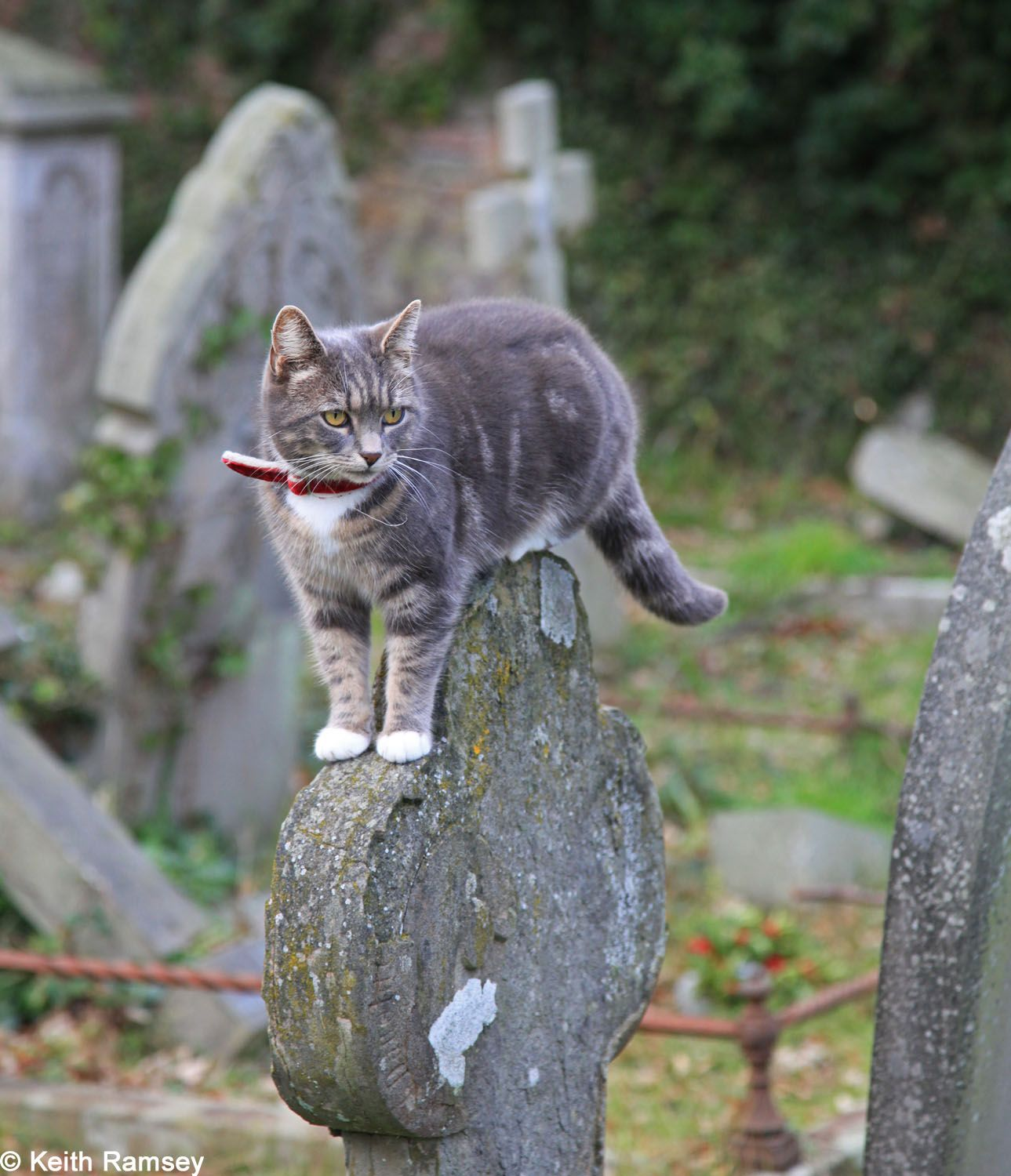 Pin On Cemeteries With Cats