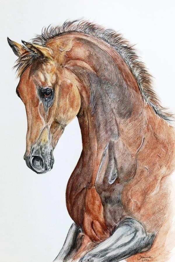 Pencil Drawing Horse Drawings Horse Artwork Horses