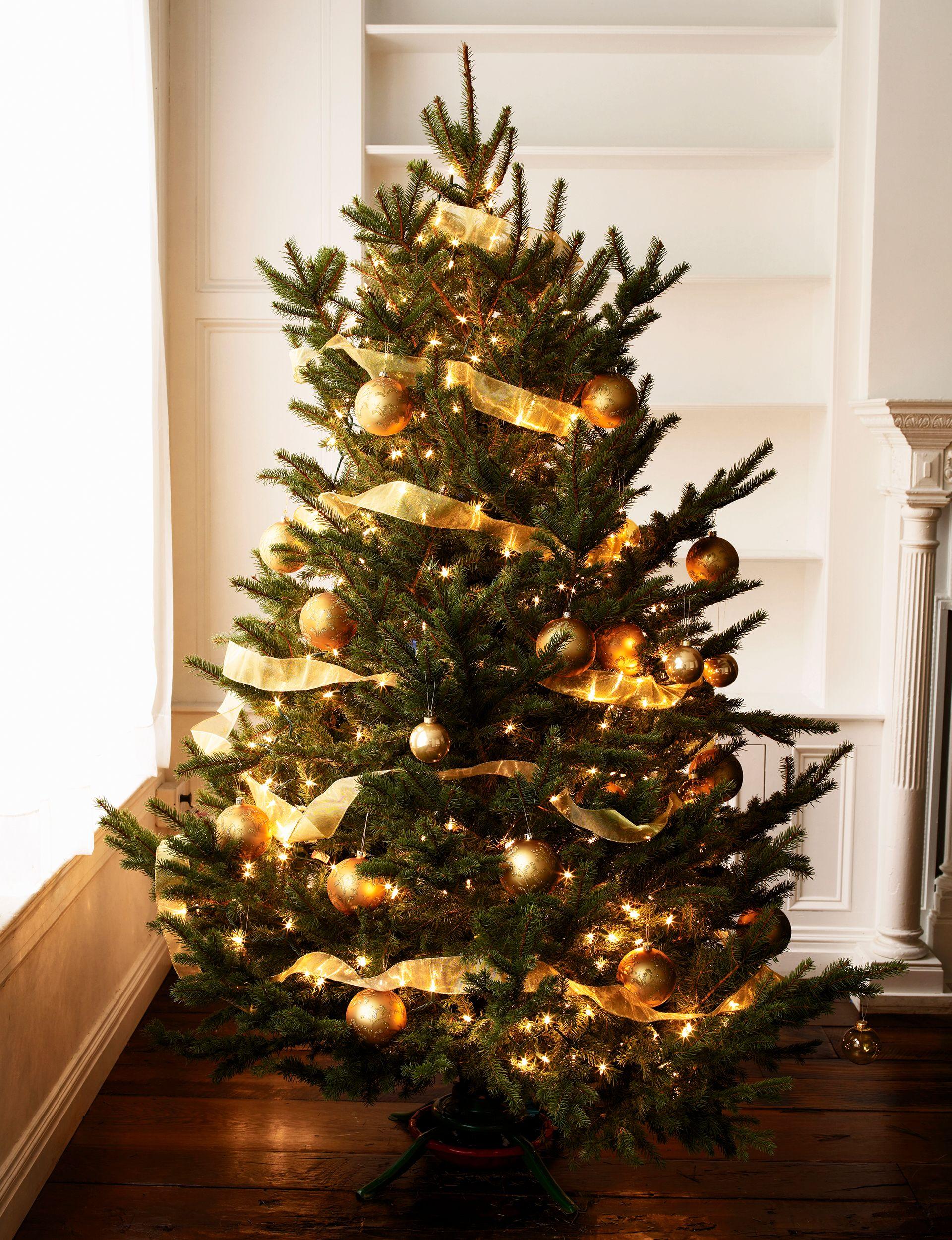 30 Beautiful Christmas Tree Ideas Outdoor Christmas Tree Gold Christmas Tree Beautiful Christmas Trees