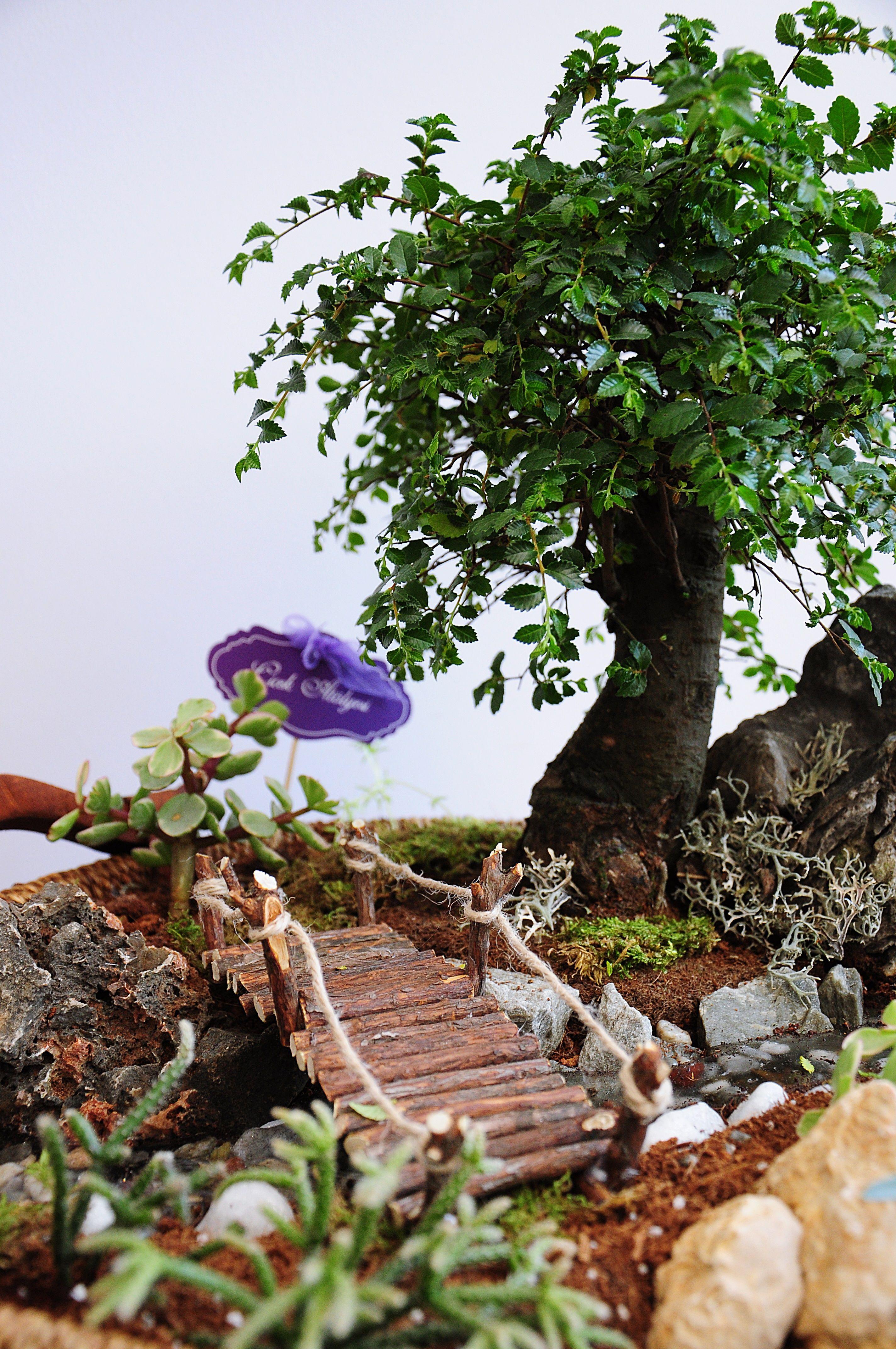 miniaturegarden bonsai