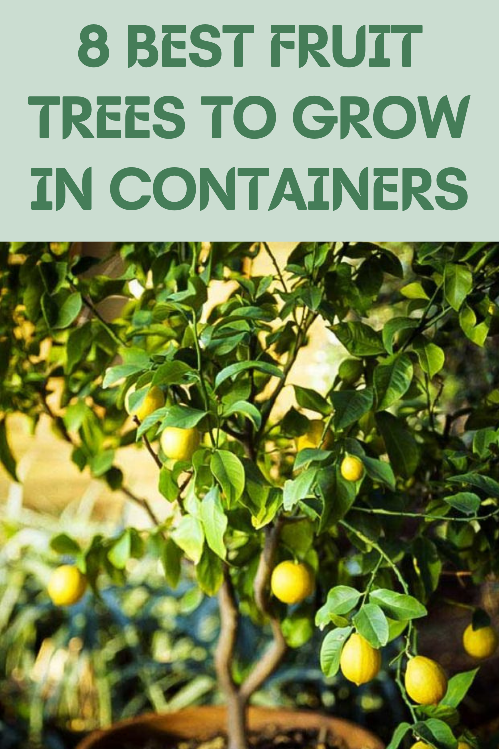 8 Best Fruit Trees To Grow In Containers Gardening Sun Best Fruits Garden Ideas To Make Garden Remedies