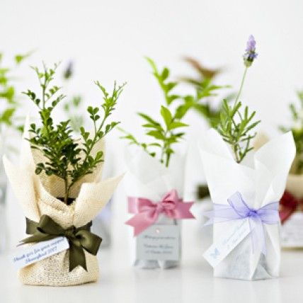Wedding Themes- Garden: Plant Bomboniere http://theknot.ninemsn.com.au/wedding-planning/wedding-styles/wedding-themes-garden/attachment/wedding-themes-garden001
