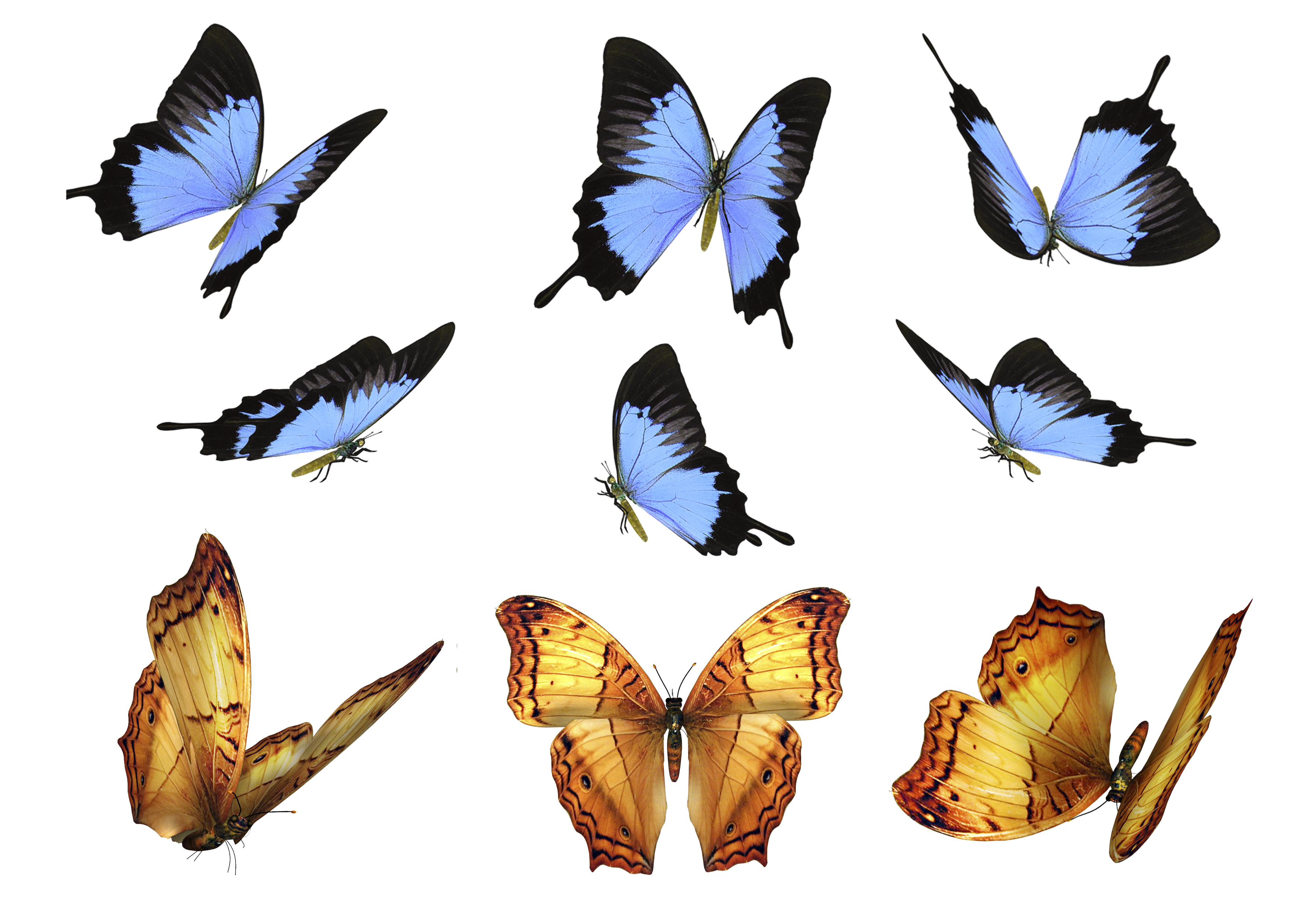 Free Butterfly Photo Overlays Photography Overlays For Photoshop Flying Butterfly Photo Overlays Photoshop Elements Actions Flying Photography