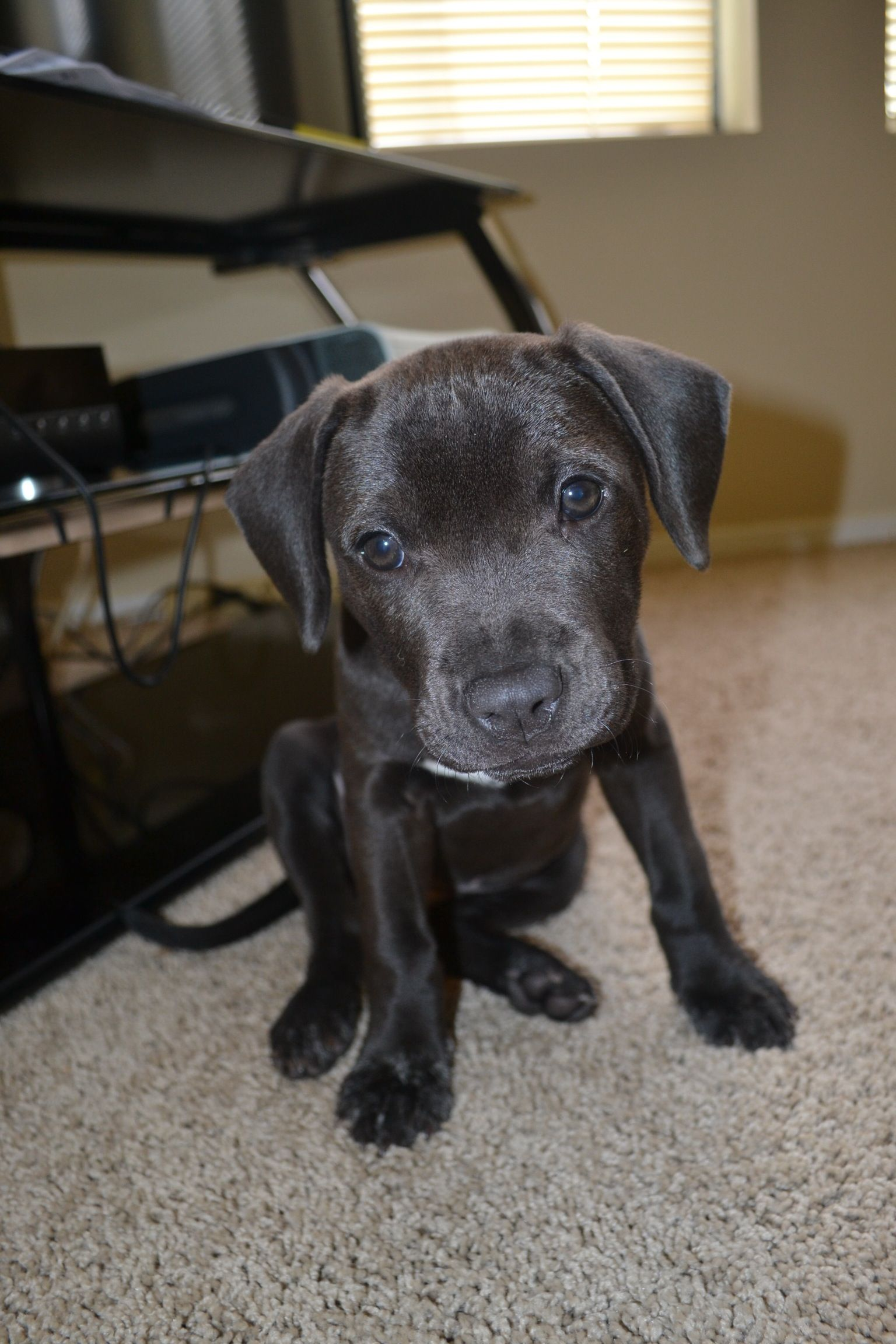 Lab Pit Hound Mix Once I Move Out Beautiful Dogs Fur Babies