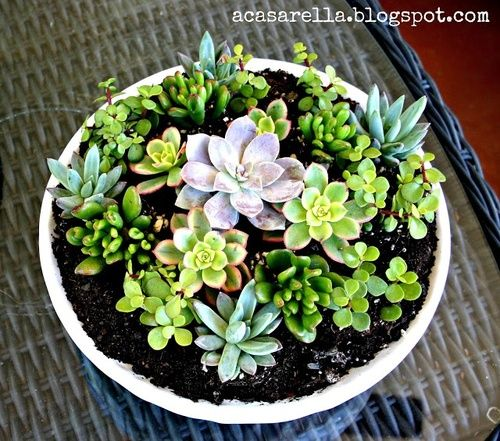 Succulents!!