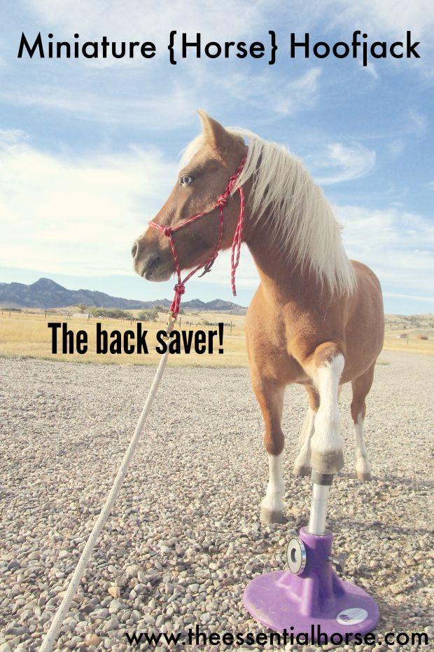 Miniature Horse Hoofjack The Back Saver Horses Horse Girl Pony