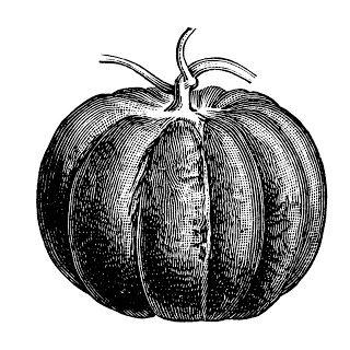 Free Vintage Clip Art Images Free Vintage Pumpkin Clip Art Clip Art Vintage Pumpkin Clipart Vintage Drawing