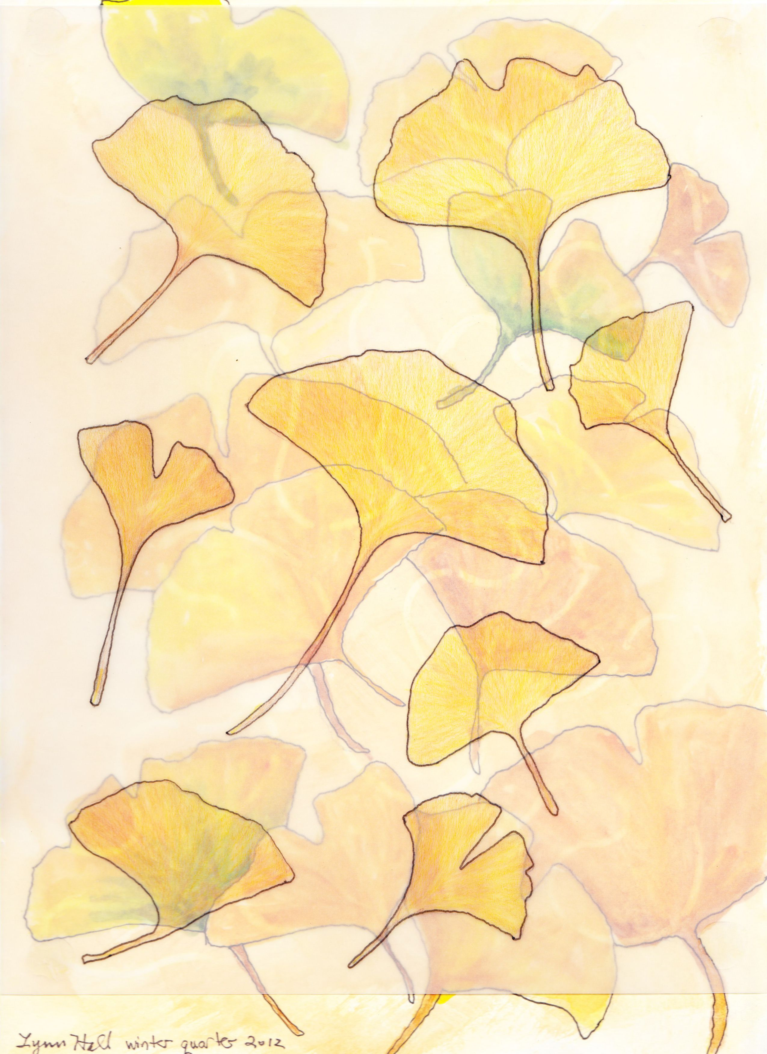 """""""Falling ginkgo leaves"""": traced ginkgo leaves on vellum, colored with colored pencils, over a page of traced leaves done with pitt pen and watercolor."""