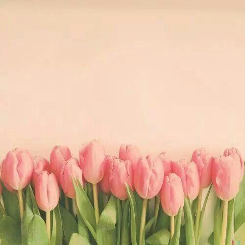 Pin De Samira Nascimento En Nature Flores Tulipanes Girasoles Fondos De Pintura De Tulipán