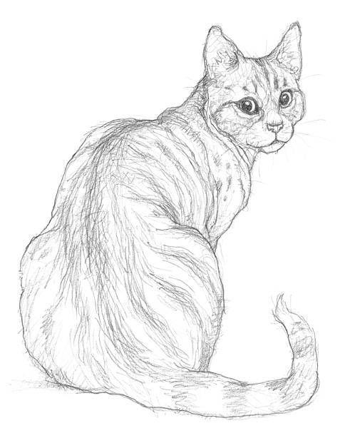 Pin Von Cherry Auf Big Cats Art In 2020 Tierillustrationen