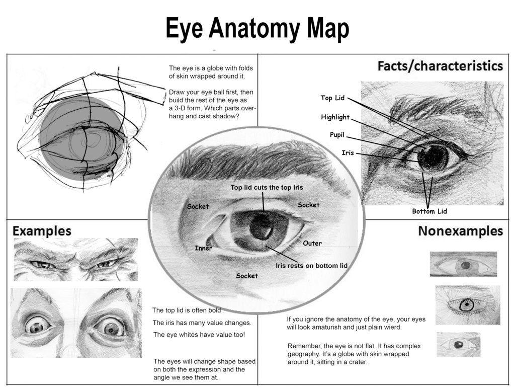 Eye Anatomy Map By Aaronverzatt