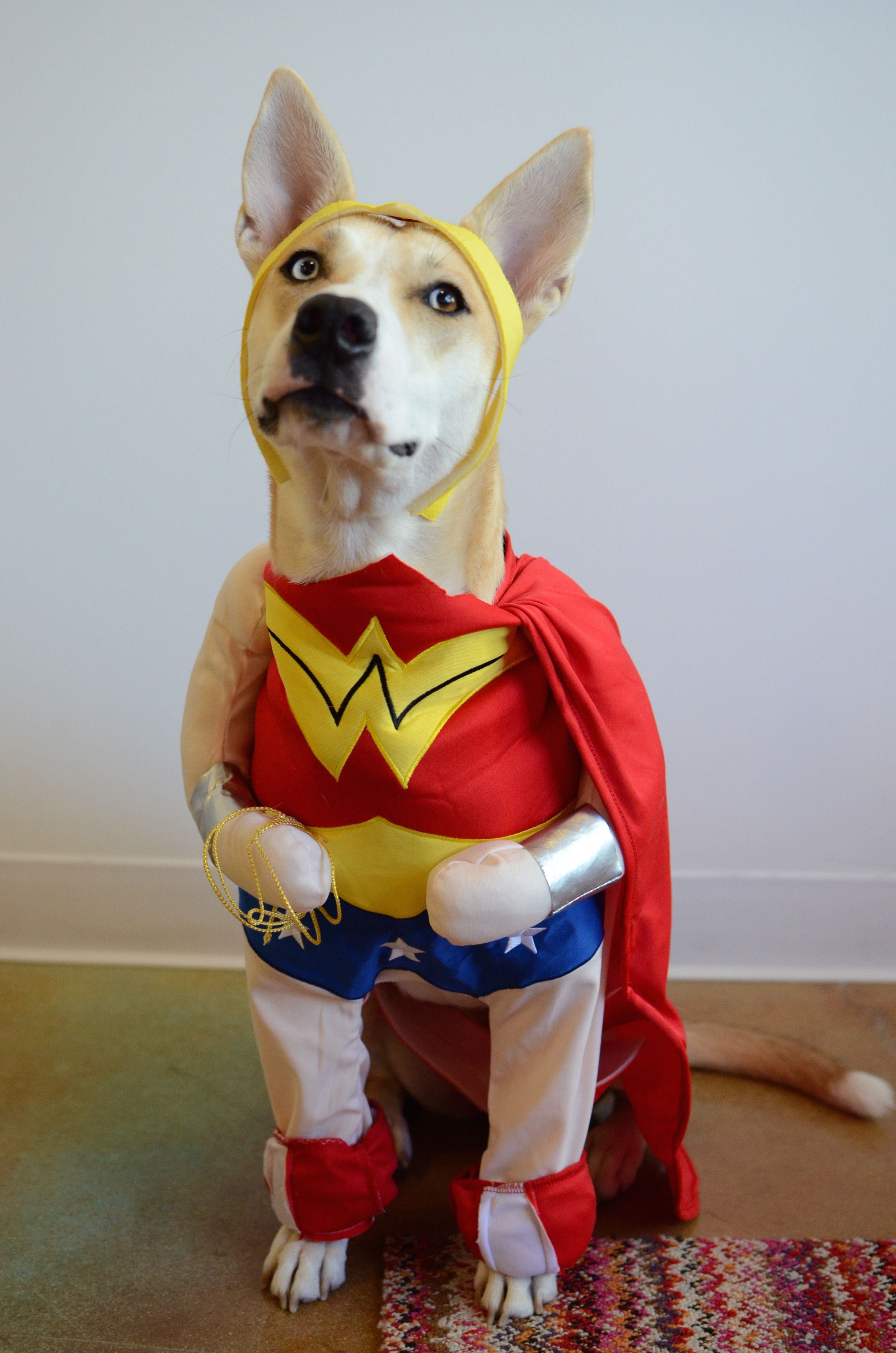 Are Dogs Smarter Than Cats? Cool pets, Animal dress up