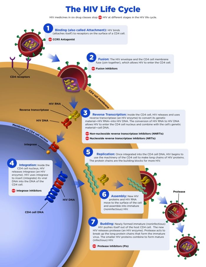 The steps of HIV replication inside a CD4 cell and how ARV medicines ...