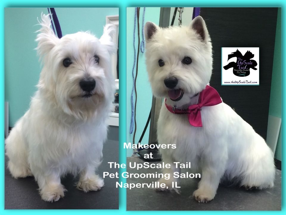 Pin By Pet Groomer S Profit Generatin On Pet Grooming Makeovers For Dogs And Cats Dog Grooming Styles Dog Grooming Salons Dog Grooming Shop