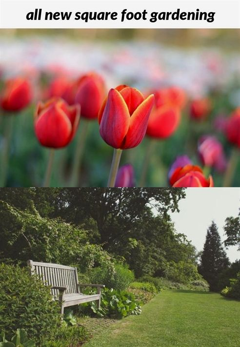 Pin On Gardening Ideas And Tips 400 x 300