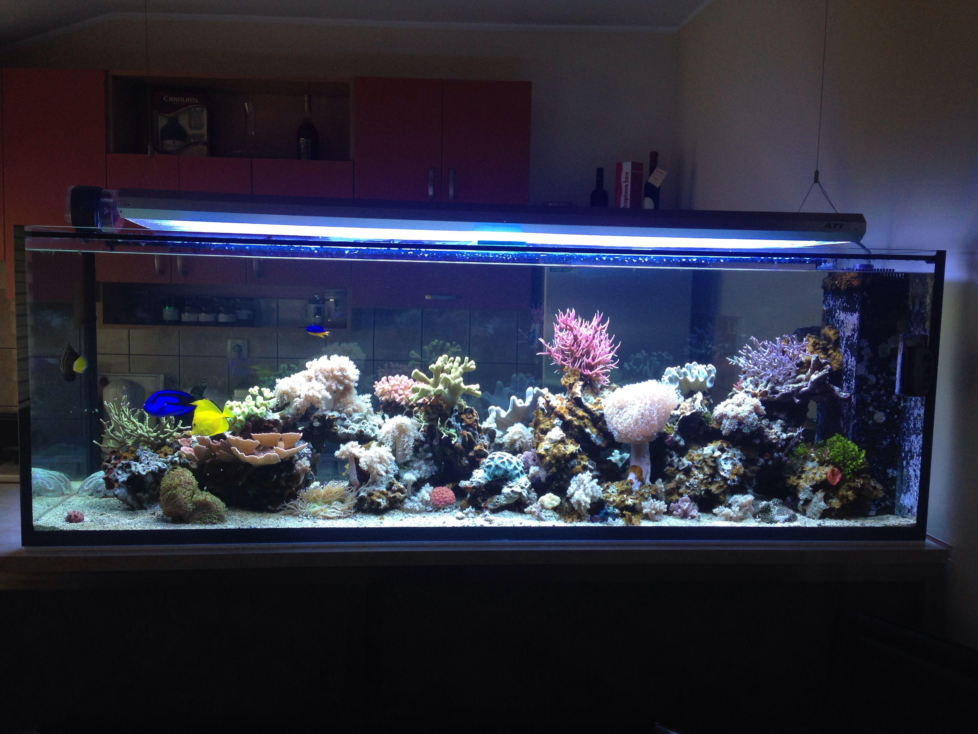Reefroom Morski Akvarijum Pancevo #Reefroom #Reeftank #Morskiakvarijum