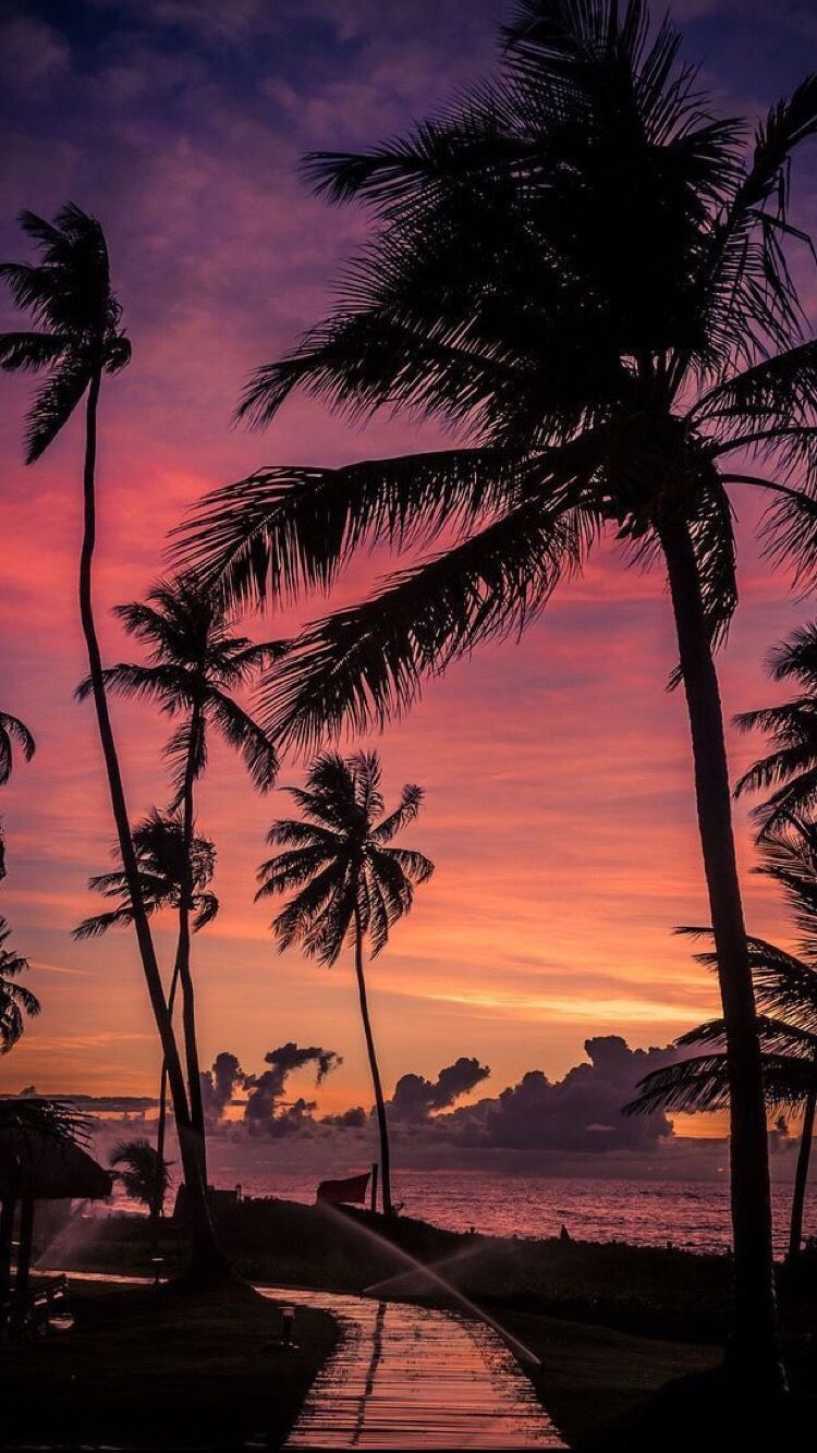 Pin By Kylin C On Wallpapers Beautiful Landscapes Palm Tree Sunset Sky Aesthetic Palm trees sunset horizon sky clouds