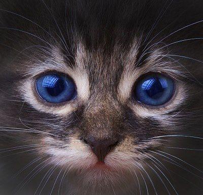 Beau chaton! ::: Beautiful kitten!