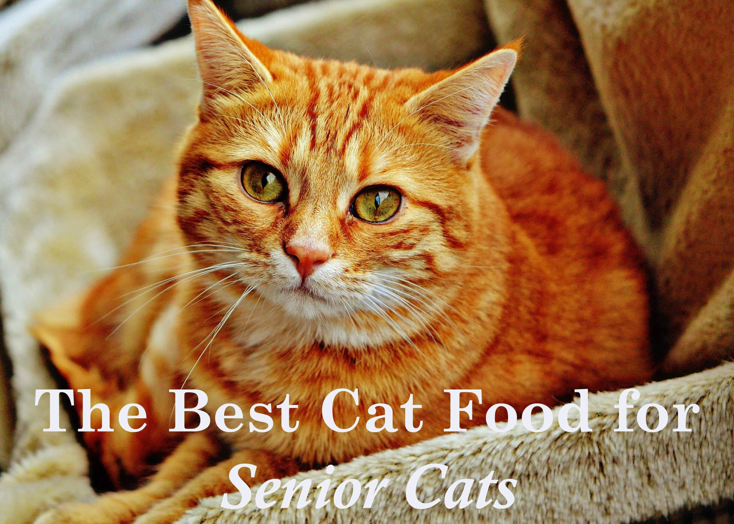 The Best Cat Food for Senior Cats 2020 Cute cat names
