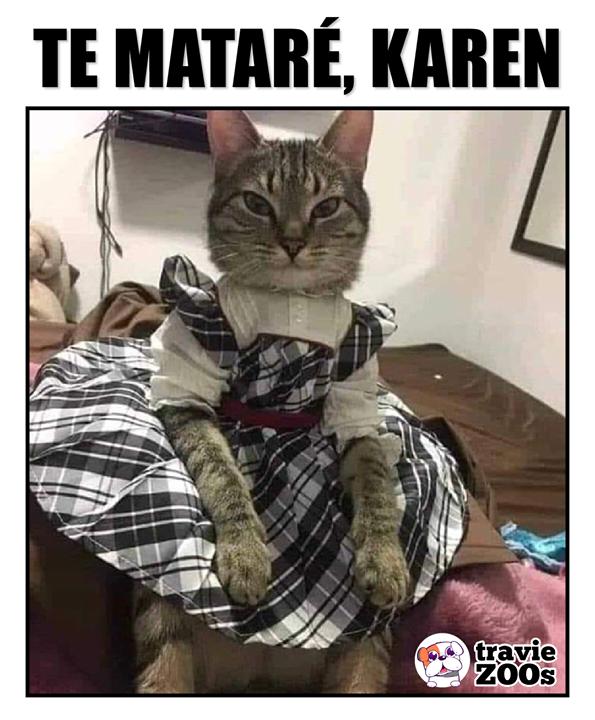 Tu Y Tus Ocurrencias Meme Gato Humor Divertido Sobre Animales Memes Divertidos