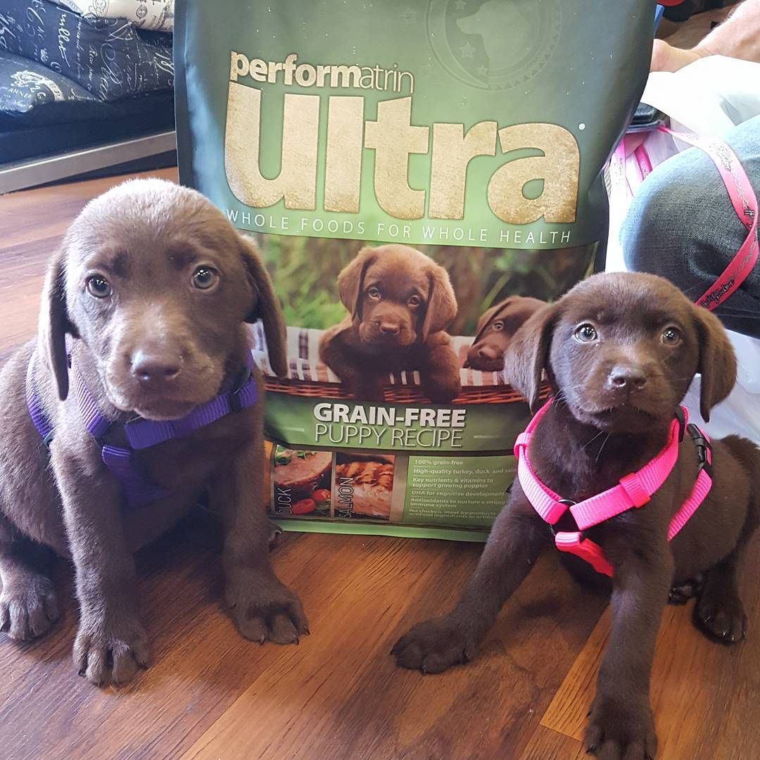 Cutecustomeralert Harley And Piper Are Performatrinpuppies Pet Valu Free Puppies Pets Puppies