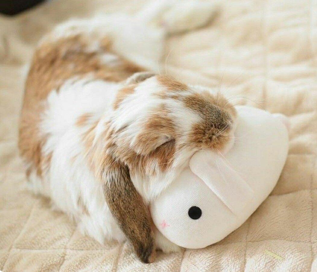 pin von me ve auf l ve kaninchen kaninchen bilder und s e tiere. Black Bedroom Furniture Sets. Home Design Ideas