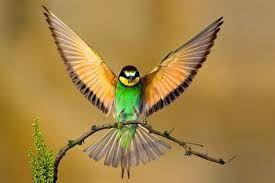 Risultati immagini per uccelli