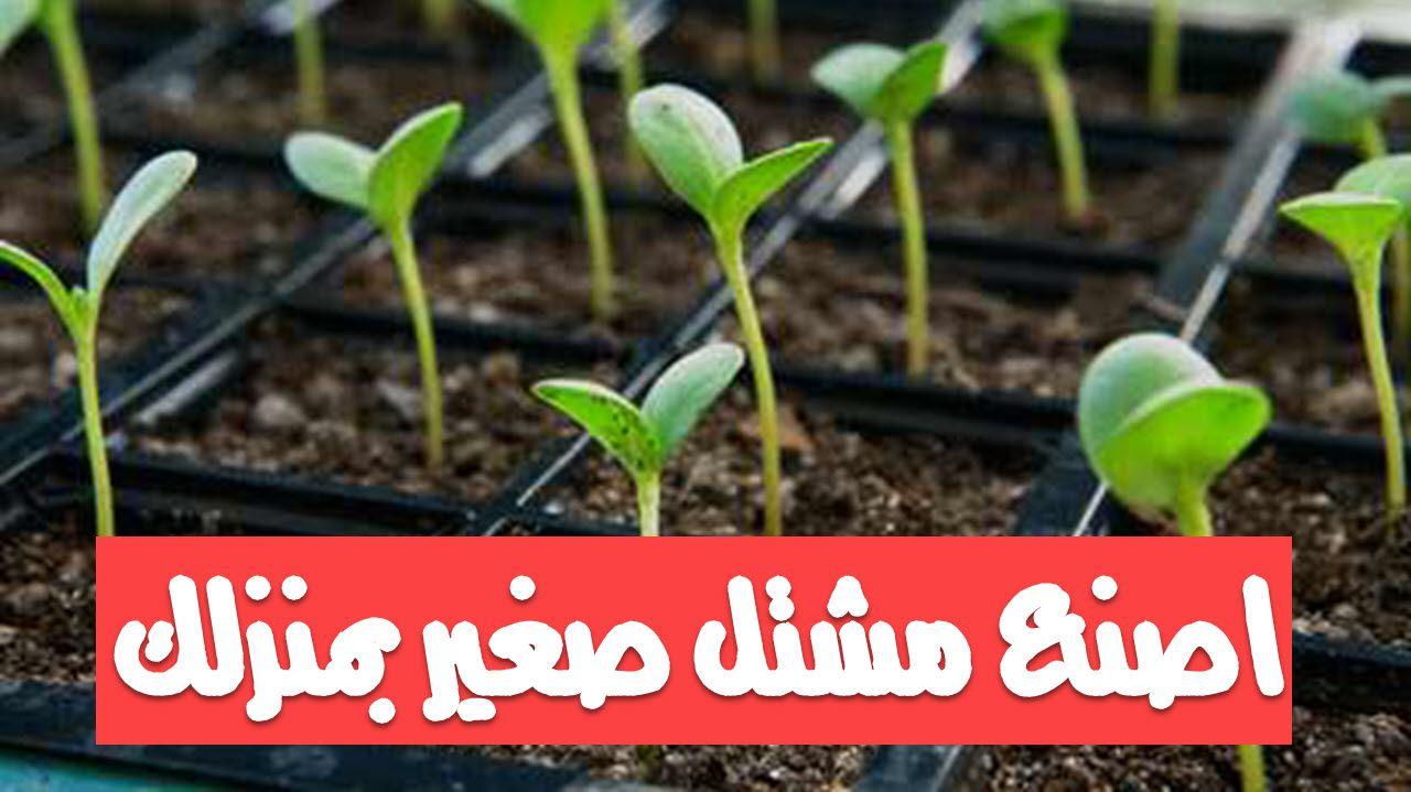 اصنع مشتل صغير بمنزلك Plants Herbs Garden Design