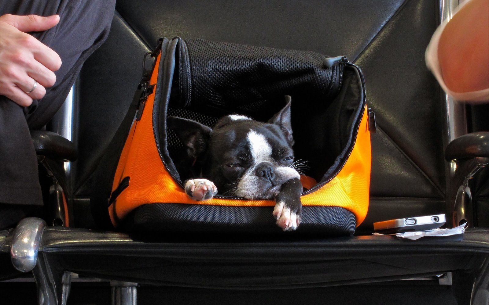 Here's How Much It Costs to Travel With Your Pet (Video