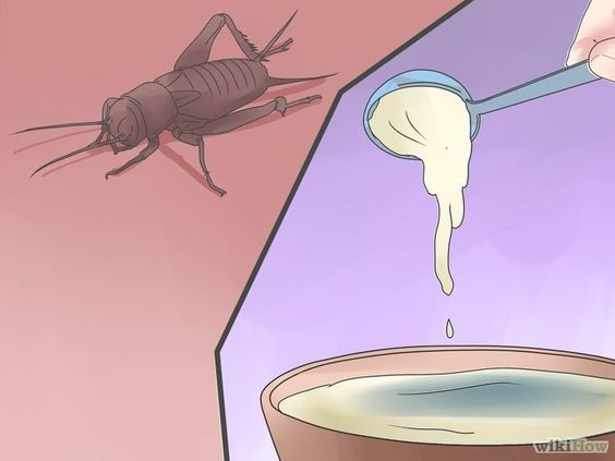 Get Rid Of Crickets Getting Rid Of Crickets Cricket Homemade Bug Spray