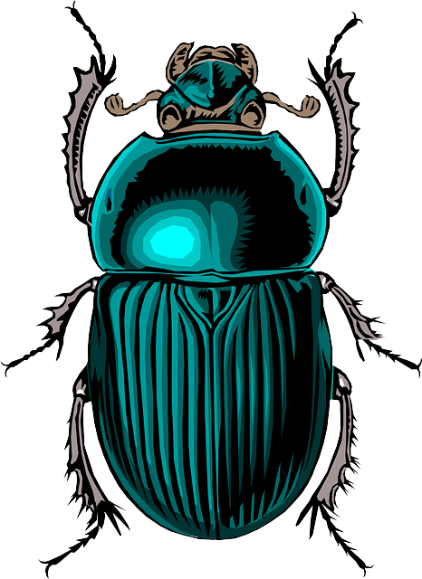 Free Image on Pixabay Beetle, Insect, Bug, Scarab, Stink