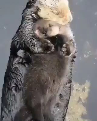 Photo of Schau dir diesen Seeotter an, der sich an ihr Baby kuschelt!