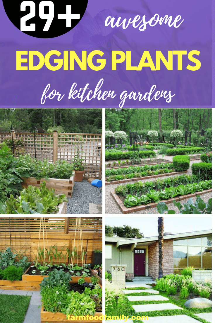 Here Are Ideas For Edging Plants To Surround The Kitchen Garden Vegetablegarden Gardenedging Gardenideas Farmfoodfamily