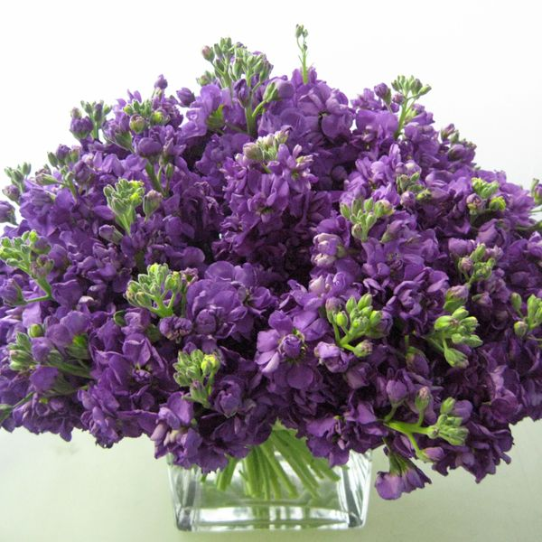 Purple Stock Wedding Centerpiece For An October Or Event Consider Available And Budget Friendly Your Arrangements The Is Lovely