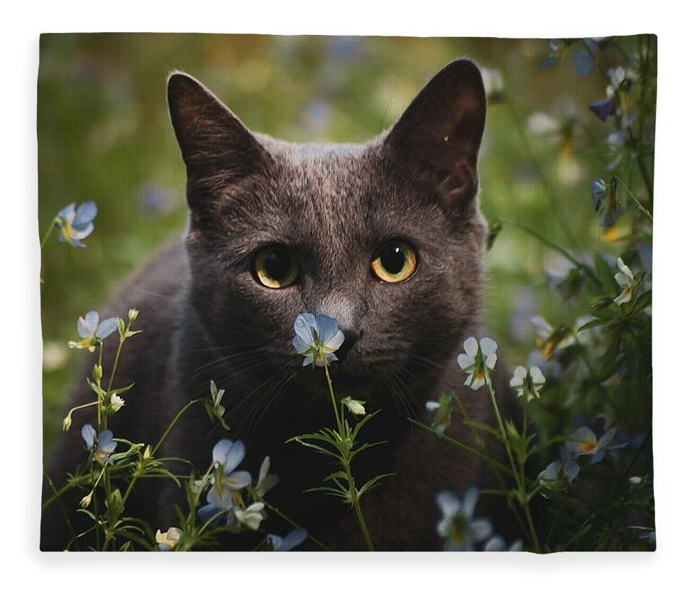 Juta In The Flowers Fleece Blanket For Sale By Kettukas Photography Pretty Cats Funny Cute Cats Cute Cats