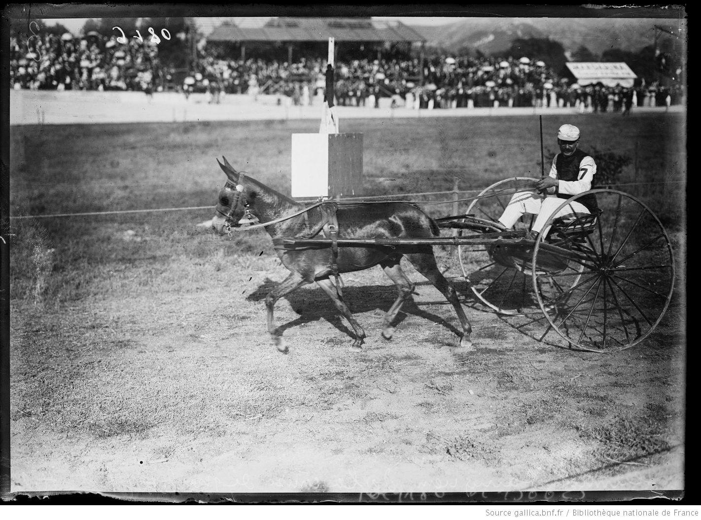 Jeannot vainqueur de la course de mulet (trot attelé) [août 1907, asinodrome de Marseille] : [photographie de presse] / [Agence Rol]