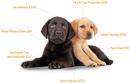 Your Puppy S First Vet Visit What To Expect Puppies Pet Insurance Cost Pets