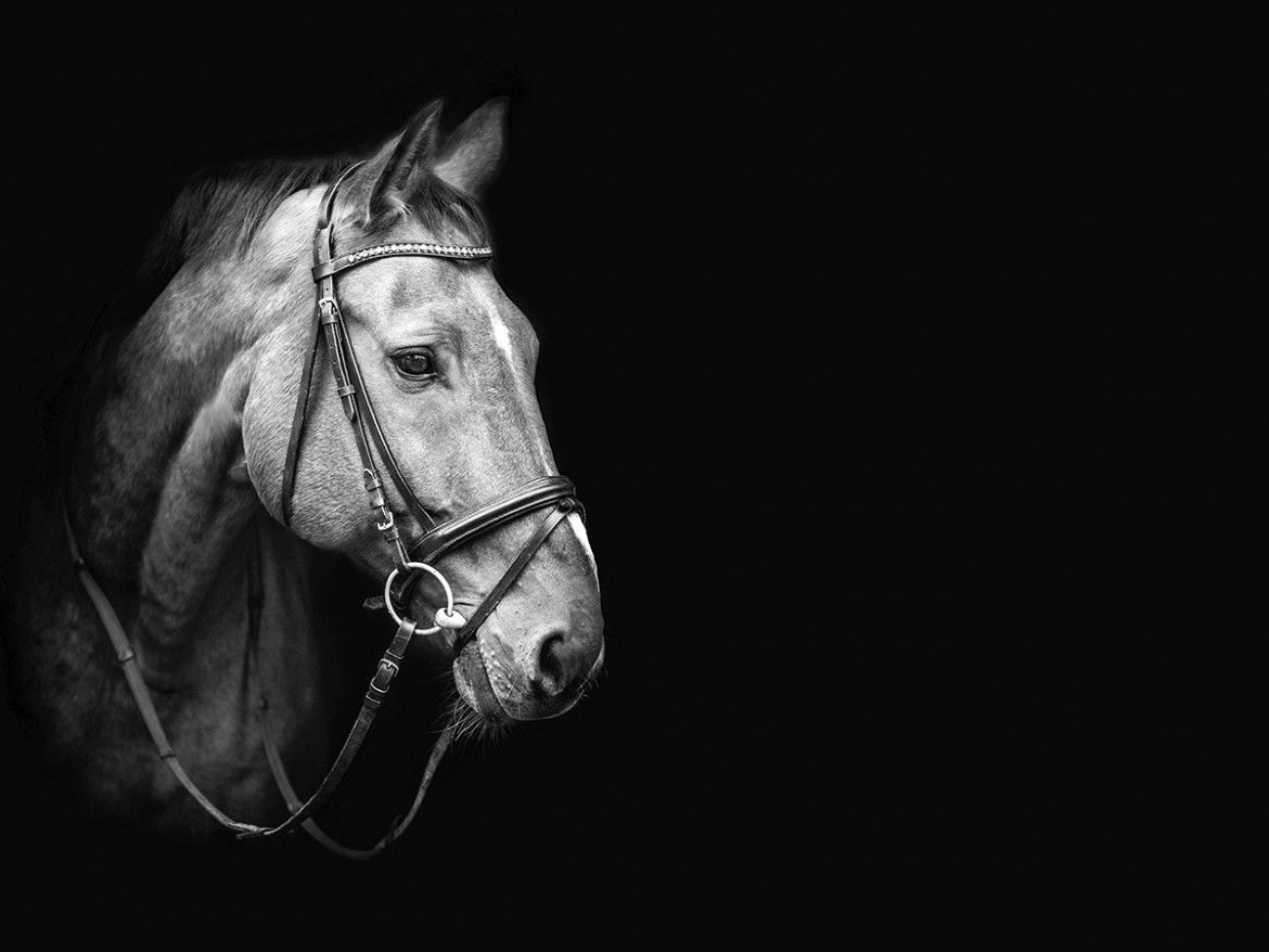 Black and white horse photos source