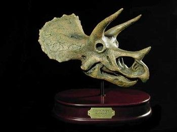 Triceratops Dinosaur Skulls Replicas Models for sale at www.SkeletonsAndSkullsSuperstore.com. These skulls and skeletons replicas are ideal for educators, veterinarians and students.